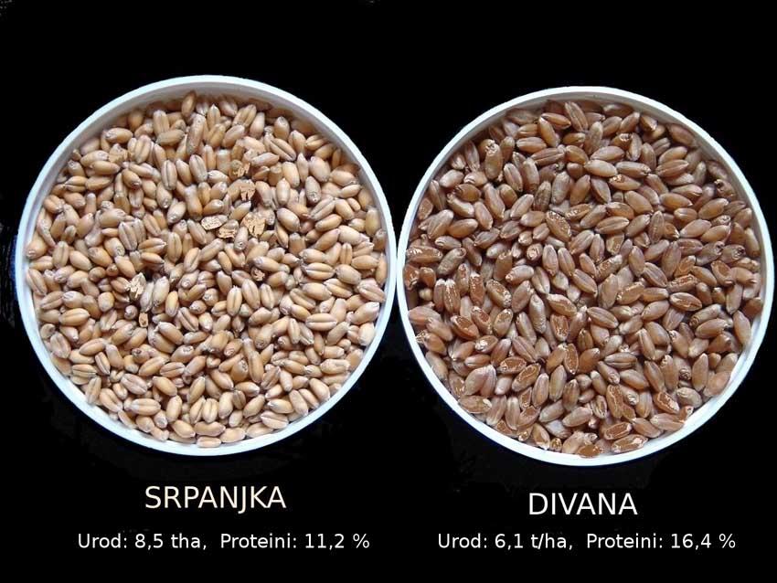 GMO - izum bez razuma - strana 291 - Srpanjka i Divana