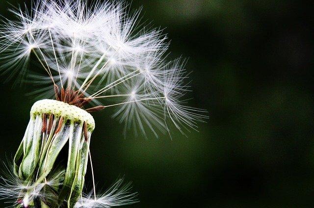 Alergija – što je to?